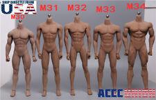 TBLeague 1/6 Steel Skeleton Male Muscular Seamless Body M30 M31 M32 M33 M34 M35