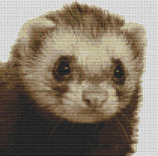 """Hurón puntada cruzada contada Kit wildlife/pets 8 """"x 8"""" libre de envío"""