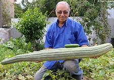 20 GIANT CUCUMBER SEEDS 2018 OVER 5FT LONG POSSIBLE!