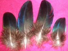 lot 4 plumes de paon saphir bleues metallisé