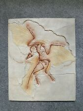 Realistic replica of Archaeopteryx Dinosaur Fossil