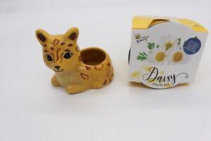 Ceramic Animal Planter Jay the Jaguar & Daisy Growing Kit