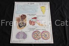 Affiche ecole oursin escargot mollusque ver tenia classification vertebre