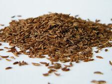 Echter Kümmel - Carum carvi - 200 Samen - Saatgut - Garbe - Heilpflanze - 001434