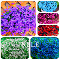 100 PCS Seeds Lobelia Plants Garden Bonsai Flowers Garden Decoration Rare 2019 N