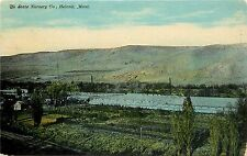 Vintage Postcard; Greenhouses, State Nursery Co., Helena MT Agriculture Unposted