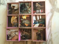Cat Kitten Photos Images Hot Pink Square Photo Collage Frame
