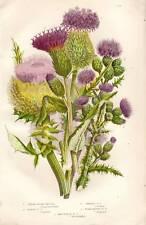 1899 impresión Anne Pratt botánico antiguo victoriano flor cromolitografía
