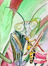 "Original watercolor painting""Mantis""by Nardu Debrah,Animals,Size10""x13.5"""