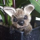 Realistic Baby Kangaroo OOAK Joey Australian Fauna Wildlife Doll Animal