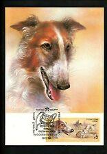 Postal History Russia Scott #5667 Maximum Postcard Fdc 1988 Dog Borzoi Fox Hunt