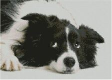 "Border Collie Puppy Dog 31cm x 22cm(12"" x 8.75"") D2410"