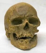 REPRODUCTION FOSSILE crane Cro Magnon 1868 Sapiens Skull cast paleolithique