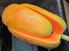 10 Graines Sweet Big Thai Holland Papaya  tropical fruit  seeds