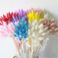 30pcs Dried Natural Flower Bouquets Lagurus Ovatus Rabbit Tail Grass Home Decor