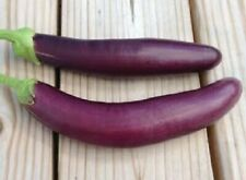 100 Long Black Eggplant Seed Aubergine Seed 가지