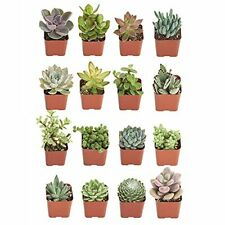 New listing Succulents   Unique Collection   Assortment of Hand Selected Fully Rooted Liv...