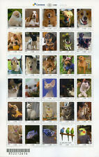 Brazil 2018 MNH UPAEP Domestic Animals 30v M/S Cats Dogs Birds Fish Stamps