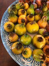 Punica Protopunica Seeds (Wild Pomogranate) Rare (Harvested Dec 2017)
