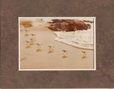 LANG Art Photography Shorebirds Rick and Cheryl Lang Sepia