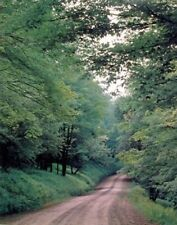 Country Road in Forest Trees Landscape Scenery Wall Art Print Picture (8x10)