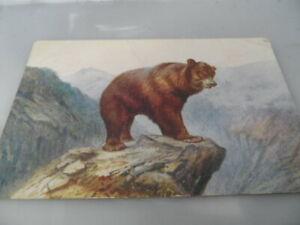 Brown Bear Artist Impression   POSTED 1928     VINTAGE POSTCARD GOOD CONDITION