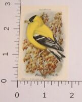 Victorian Trade Card Useful Birds Of America Yellow Bird Arm & Hammer