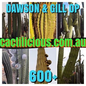 Echinopsis -  Dawsons & Gill  OP - 6 Types  Cactilicious.  600+ seeds.   Cactus.