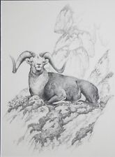 HAYDEN LAMBSON-ID/NM Realist-Signed Pencil Drawing-Ram on Mountain