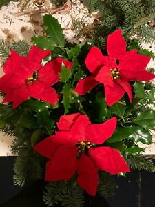Artificial Red Poinsettia Heads For Christmas Decoration Craft Wreaths 3 Heads