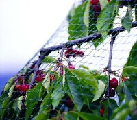 Knitted Anti Bird Netting Garden Pond Veg Fruit Cage Net 17mm x 17mm Hole - 100m