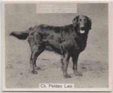 Flat Coated Retriever 1930s Champion Dog Breed Canine Pet Ad Trade Card