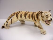 Clyde Beatty Cole Bros Circus - Smallest Tiger in the World - Taxidermy