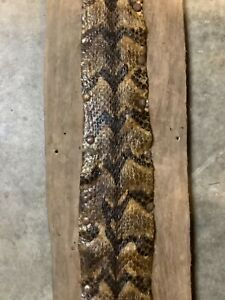 Awesome  rattlesnake skin on driftwood 4 footer mount taxidermy man cave
