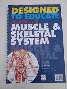 Anatomy Education Books Set of Four A3 Size