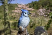 Singing Blue Jay Bird Standing On Stump - Motion Activated Singing Figurine