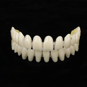 280PCS Dental Denture Synthetic Resin Teeth False Teeth Upper / Lower Shade A2