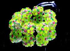 8 PCS Handmade Lampwork Glass Beads set Charm Bracelet Rondelle Murano (Green)