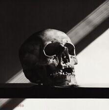 1988 Vintage SKULL Still Life Duotone Photo Engraving Art By ROBERT MAPPLETHORPE