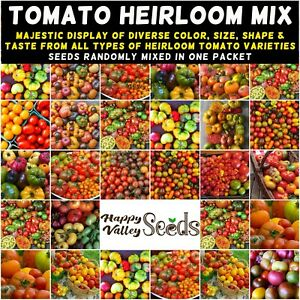 TOMATO Heirloom Mix 40 Seeds ALL TYPES MIXED spring summer vegetable garden RARE