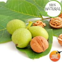 High Nutrient Fruit Seeds Plants Tree Flores Healthy Walnut Bonsai For Home As
