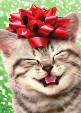 Happy Kitten With Red Bow Box of 10 Cat Christmas Cards by Avanti Press