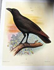 Frederick Frohawk Hawaiian Black Crow Native  Bird   13x10 Print