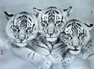 WHITE TIGER CUBS - 3D LENTICULAR TIGER PICTURE 400mm X 300mm