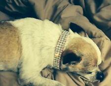 "Black Rhinestone Dog Collar Swarovski Collar Fits 8-12"" necks"