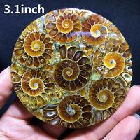top!3.1Inch Natural Ammonite Disc Fossil Conch Specimen Reiki Healing 50g+ 1PC