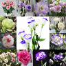 Eg _50Pcs Garten Balkon Pflanze Eustoma Blumen Lisianthus Samen Heim Katalog
