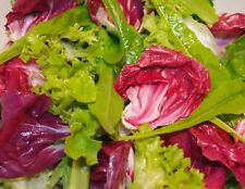 GOURMET TUSCAN CUT AND COME AGAIN RED+GREEN CHICORY+RADICCHIO MIX 2 GRAMS SEEDS