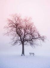 ART PRINT POSTER PHOTO LANDSCAPE WINTER SNOW FOGGY SUNRISE TREE BENCH LFMP0725