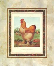 Buff Cochin Cock JW Ludlow (Cassell's Poultry Book) Art Print 14x17